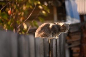 Nachbars Katze auf dem Zaun